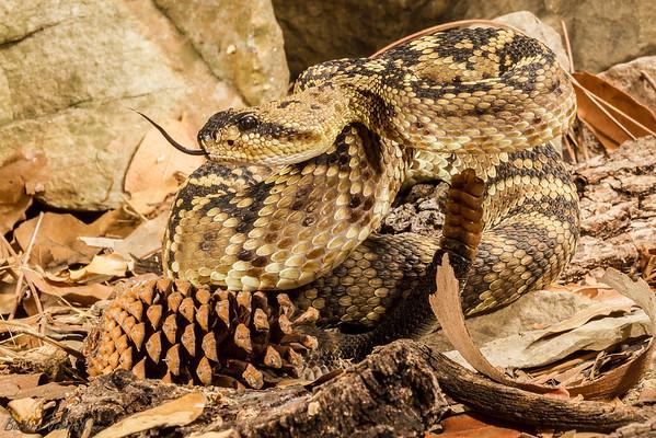 Hoot Hollow Reptile Shoot