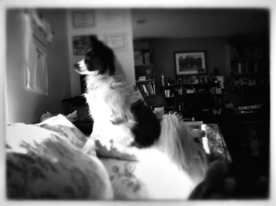 Iphoneography - Pets