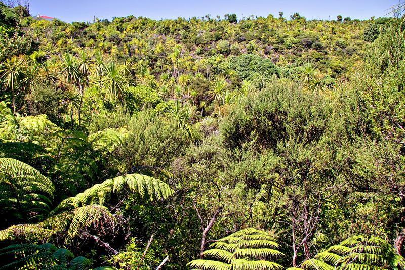 Foliage on Tiritiri Matangi Island