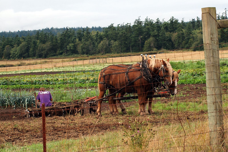 Organic farmer plowing his field the true old fashioned way
