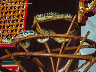 ปีนัง | วัดงู ปีนัง (Snake temple) กับงูมีพิษเต็มวัดเลย ย๊ากก