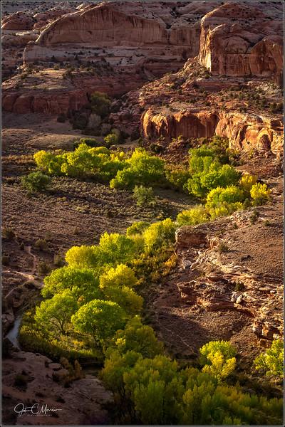 SR3_9058 Yellow Tree Snake Red Valley LPNW.jpg