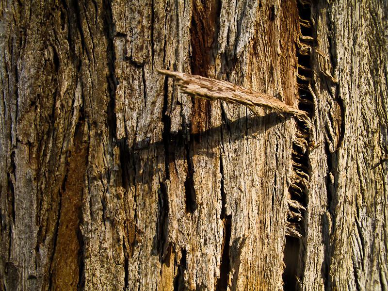 oct7-tree.jpg