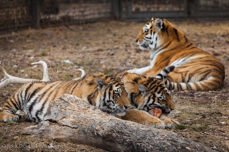 zoo_Apr_2013-37.jpg