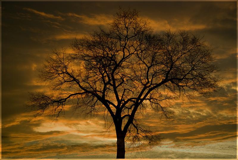 P-Sunset Sillouette-JulianSale.jpg