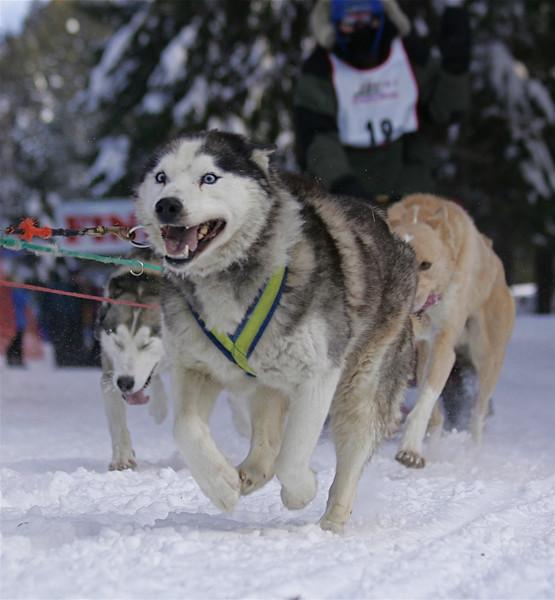 Conconully Dogsled Race Jan 2008 Card 1 248.jpg