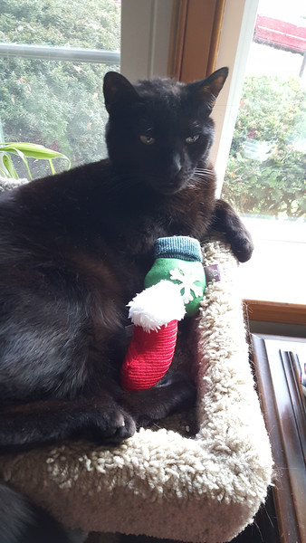 Christmas Catnip Toy