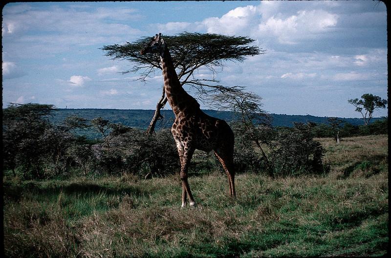 Kenya2_010.jpg