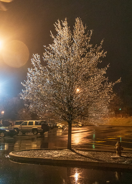 Freezing-rain-tree3.jpg