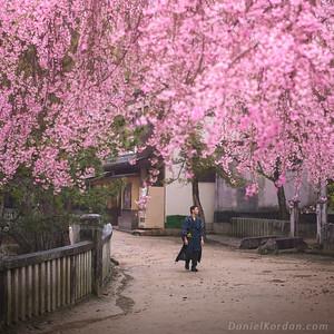 Japan spring EU/UK prints