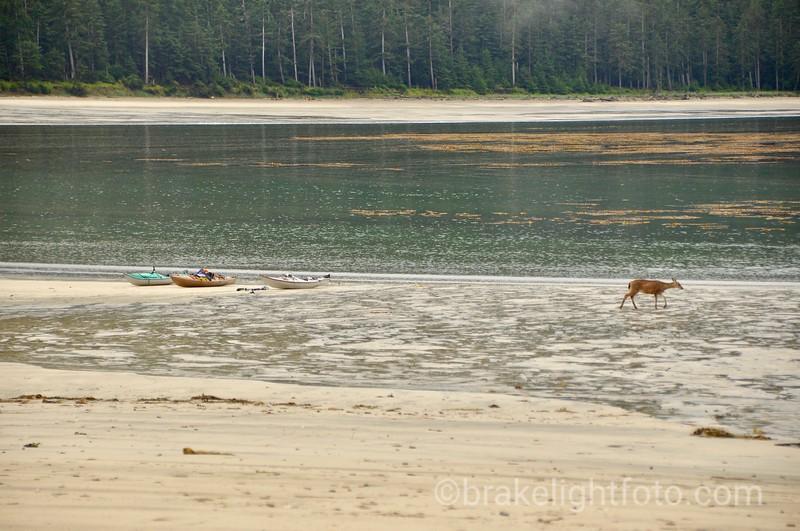 Black Tailed Deer at Joseph Creek