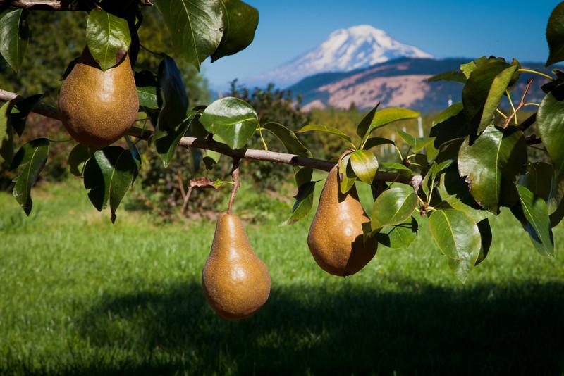 Fruit_Pears11-1003.jpg