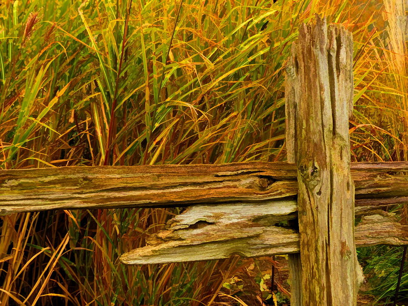 Fence and Grass II simplified.jpg