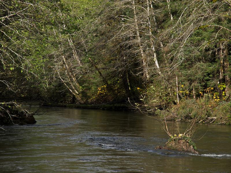 Kowee Creek in Fall