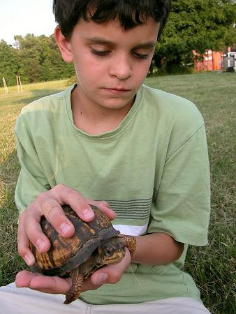 MaTT and the Box Turtle- SaM