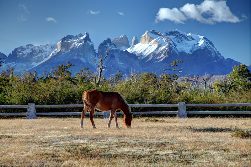 Patagonia Pony, Torres del Paine National Park, Chile. (HDR)