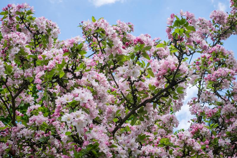 spring_15_023.jpg