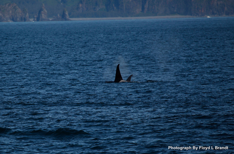 Alaska Kenai Fjords0015.JPG