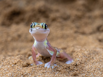 Animals of Namibia