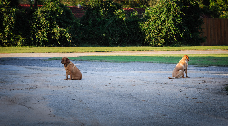 2 Dogs-5773.jpg