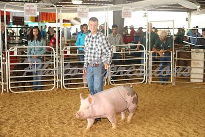 """""""Swine Show Sun 14th"""""""