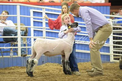 Lamb Show - Ringshots 1
