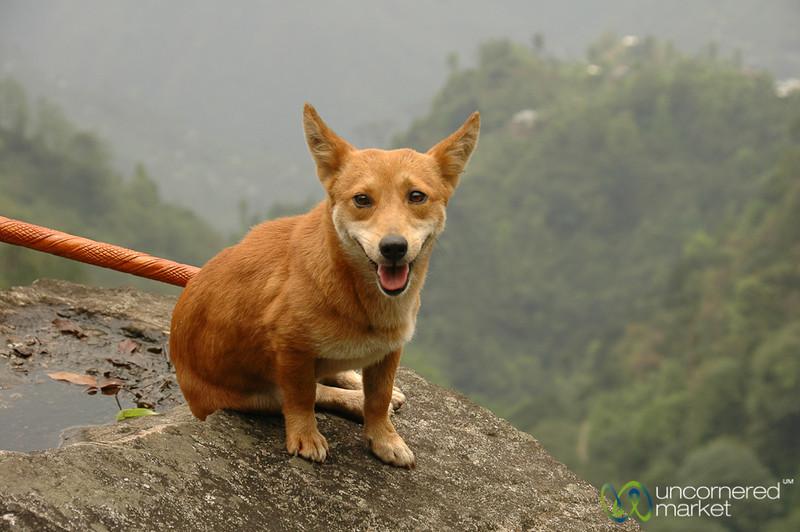 Our Canine Companion Trekking Around Yuksom, Sikkim