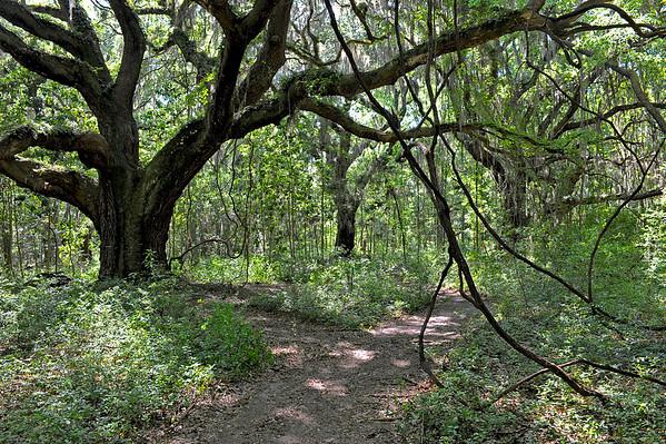 Hofwyl-Broadfield Miriam Trail 05-17-10