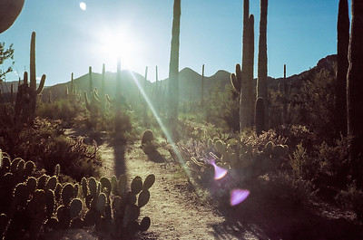 Tucson and Saguaro National Park