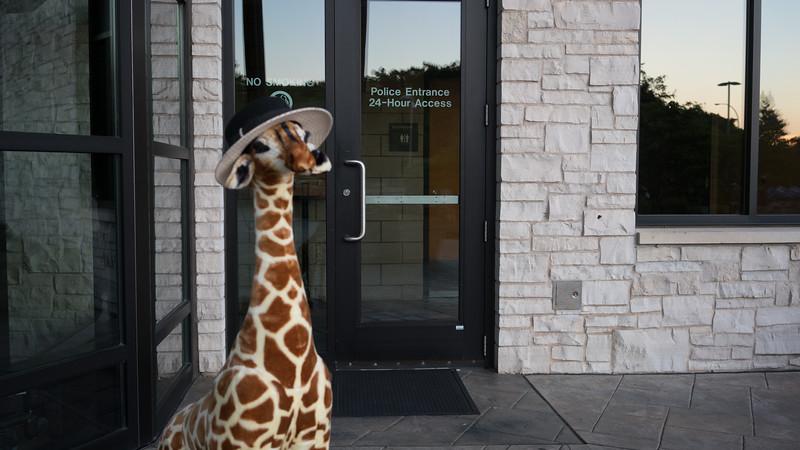 Giraffe-3126.jpg