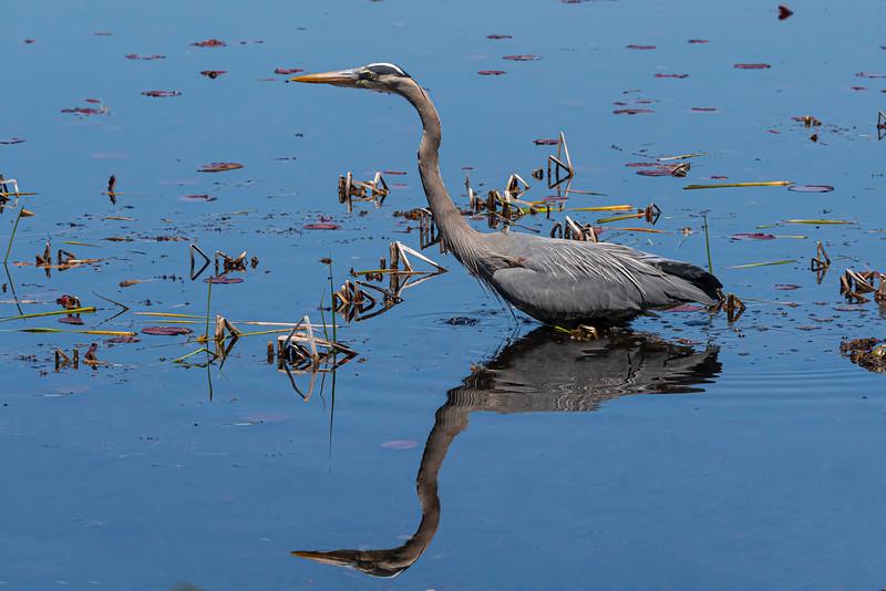 craneshadow.jpg