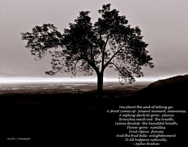 Fall2011_111002_IMG_6131-Edit-2-2.jpg