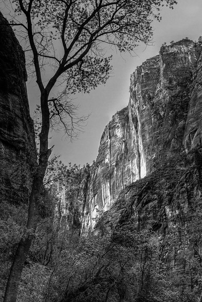 Rock in Zion National Park