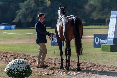 2019-09-18 SsangYong Blenheim Palace Horse Triala