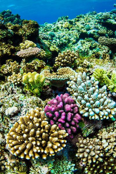 Fiji July 2012-600.jpg