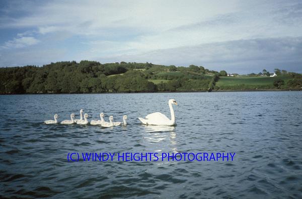 Swans Castletownshend Yacht