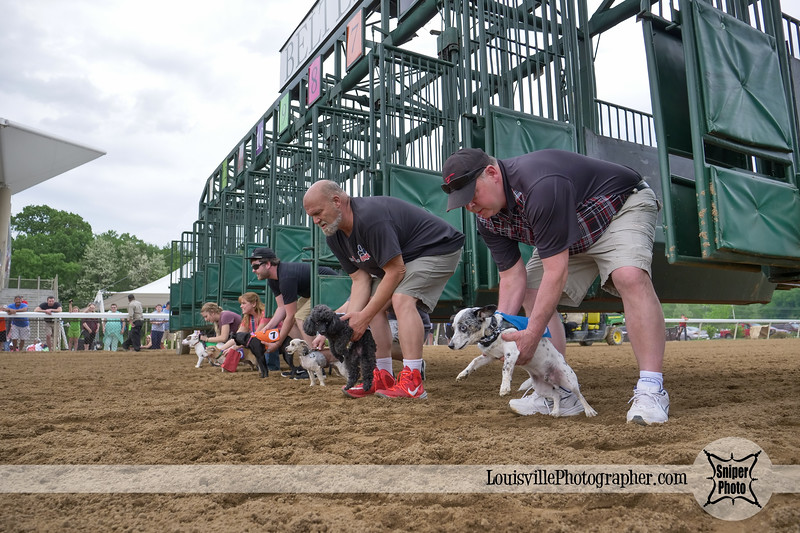 Belterra Park 2017 Wiener Dog Races-16.jpg