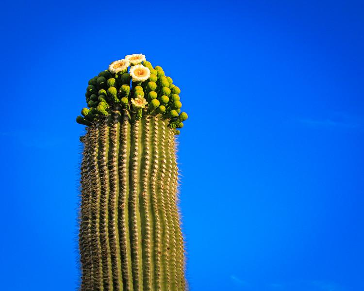 Desert Hike-0607.jpg
