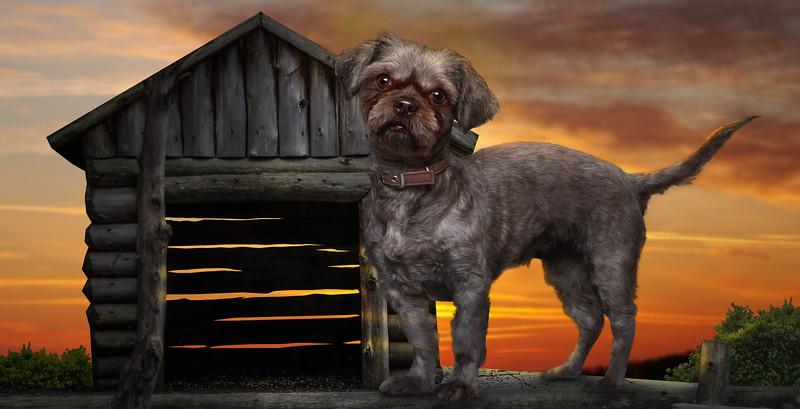 Doggy-3.jpg