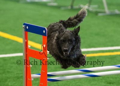 JAG AKC Agility Trial August 3-4
