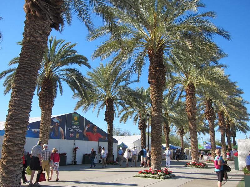 Indian Wells Palms