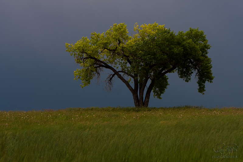 Lone Tree Summertime Rain