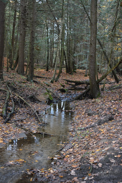 12 Brook trout habitat E Ravine.JPG