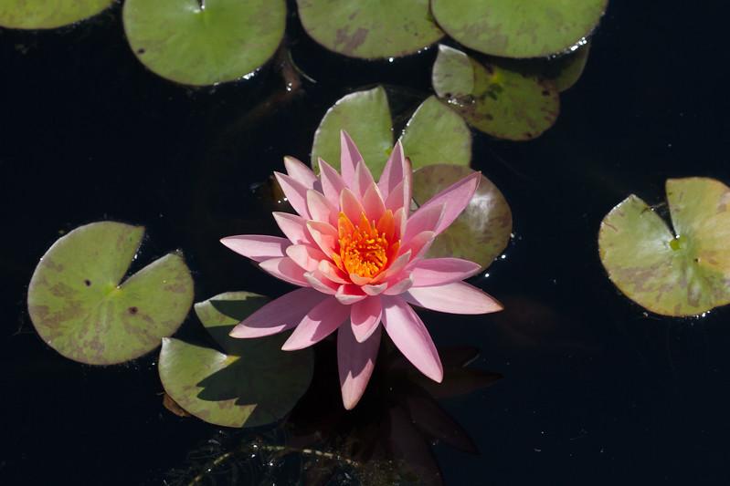 2009 06 30_NY Botanical Gardens_0718.jpg
