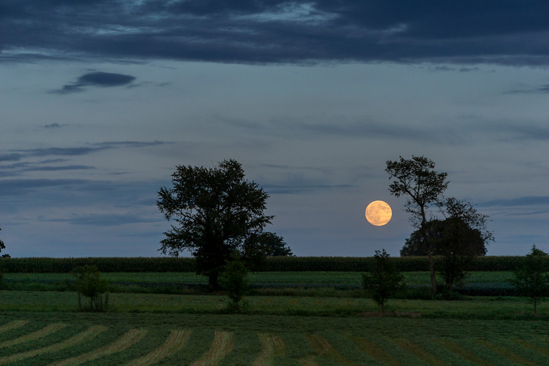 moon - full moon rising in the countryside (p) .jpg