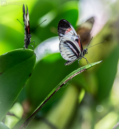 20140628_BUTTERFLY_WORLD (21 of 28)