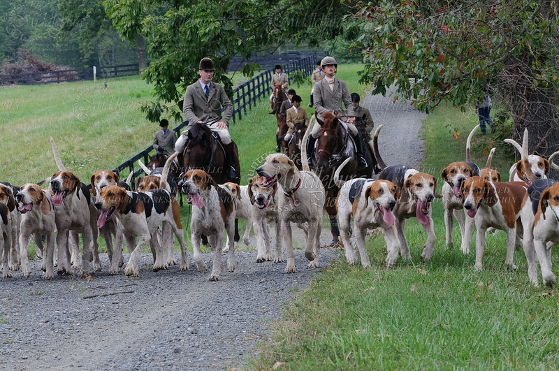 Piedmont Hounds, 2011- 9-3