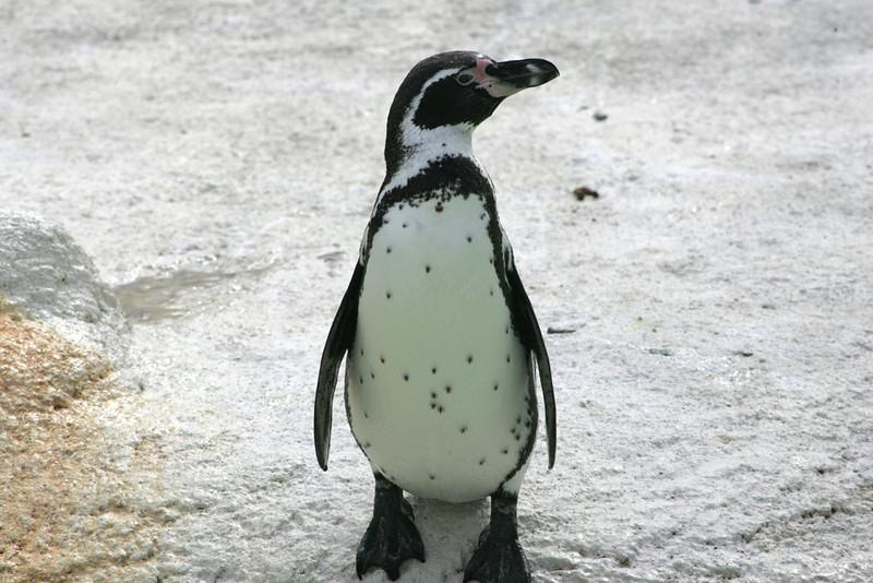 Newquay Zoo 236.jpg