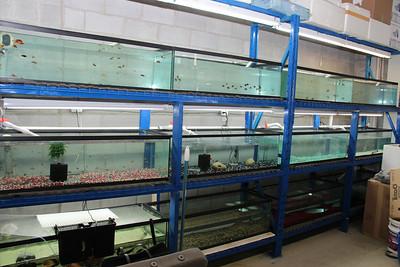 Deep Blue Aquarium Grand Opening