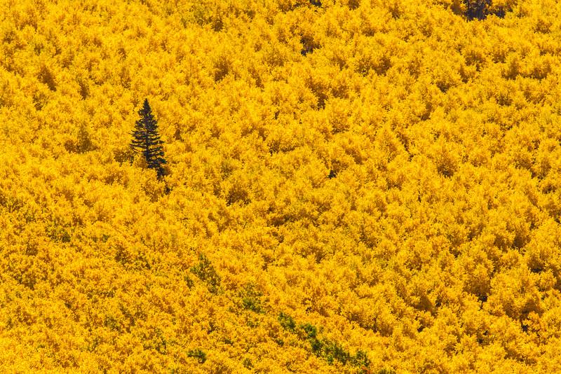 tmophoto_sea of yellow.jpg